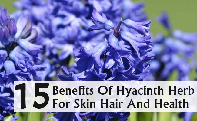 Benefits Of Hyacinth Herb For Skin Hair And Health