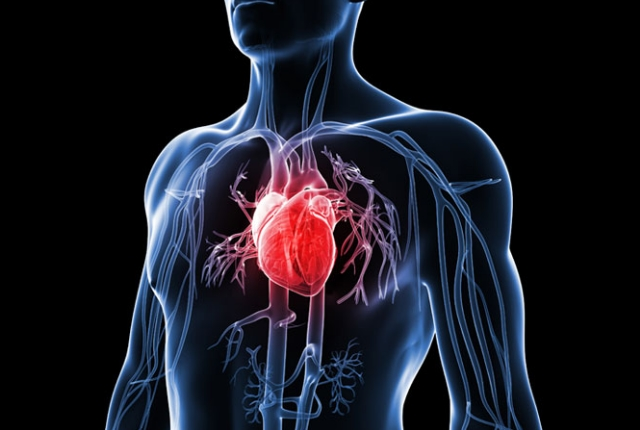 Controls The Heart Diseases