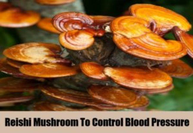 reishi-mushroom-to-control-blood-pressure