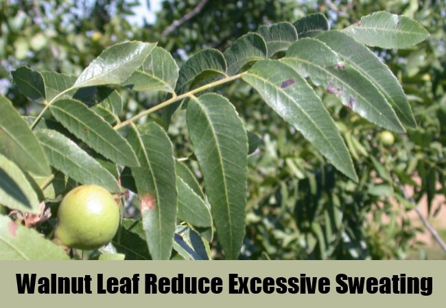 walnut-leaf-reduce-excessive-sweating