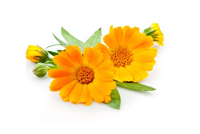 Apply OTC Calendula Ointment