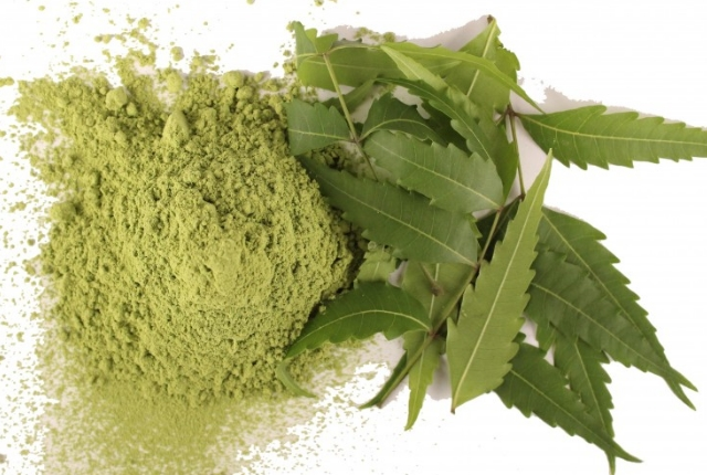 Azadirachta Indica Leaves With Green Tea