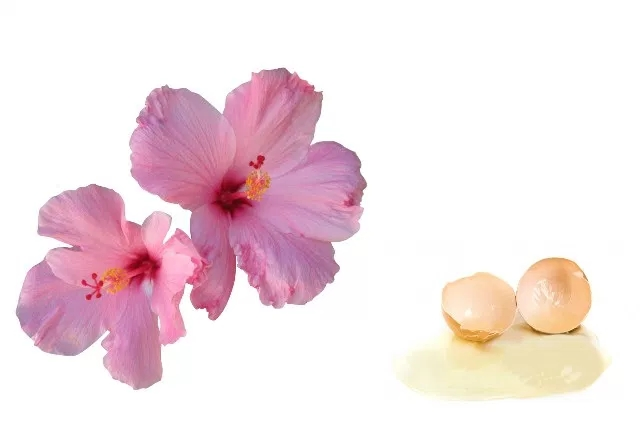 Hibiscus And Egg Mask
