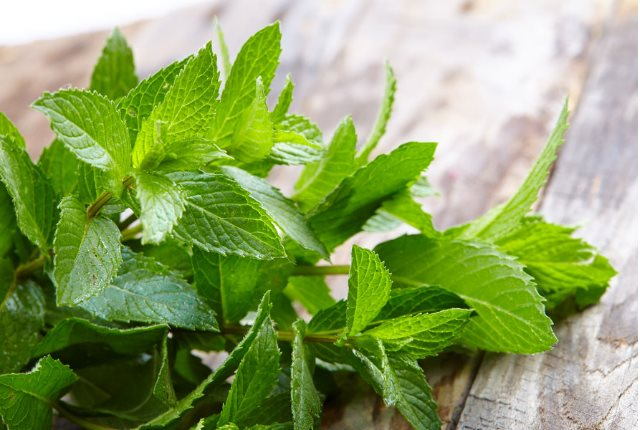 Peppermint Has a Direct Impact On The Virus
