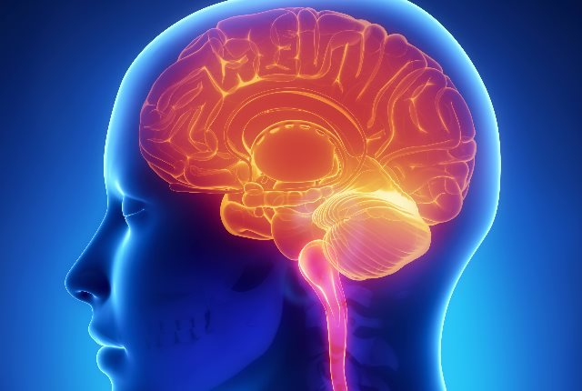 Boost The Brain