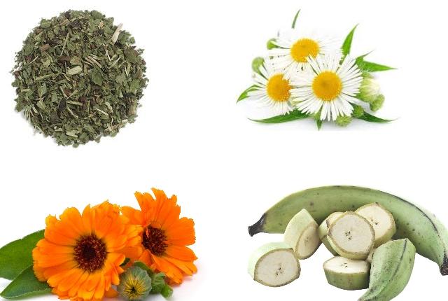 Comfrey, Chamomile, Calendula And Plantain