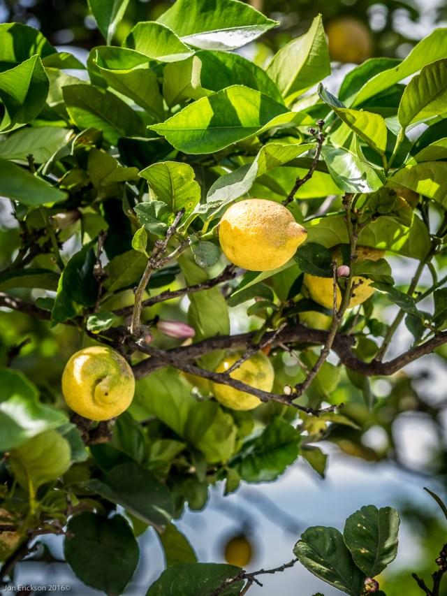 Citrus Glaore en Casa Mayoral.
