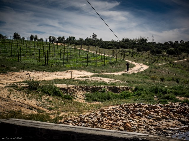 Walking home through the vineyards of Vena Cava