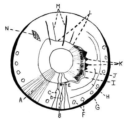 Diagram Of Transverse Colon, Diagram, Free Engine Image