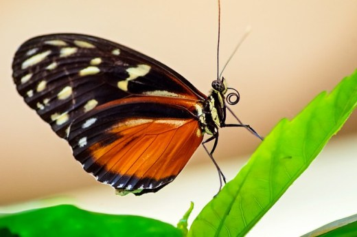 Picture of a butterfly