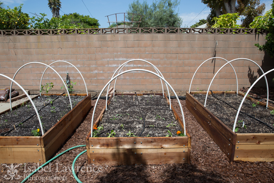Raised Bed With Drip Irrigation System