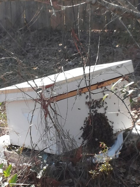 Bees on the box