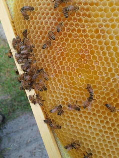 Future honey