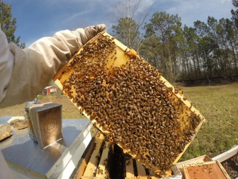 Very healthy hive