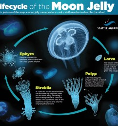 the facts of jellyfish life [ 1001 x 947 Pixel ]