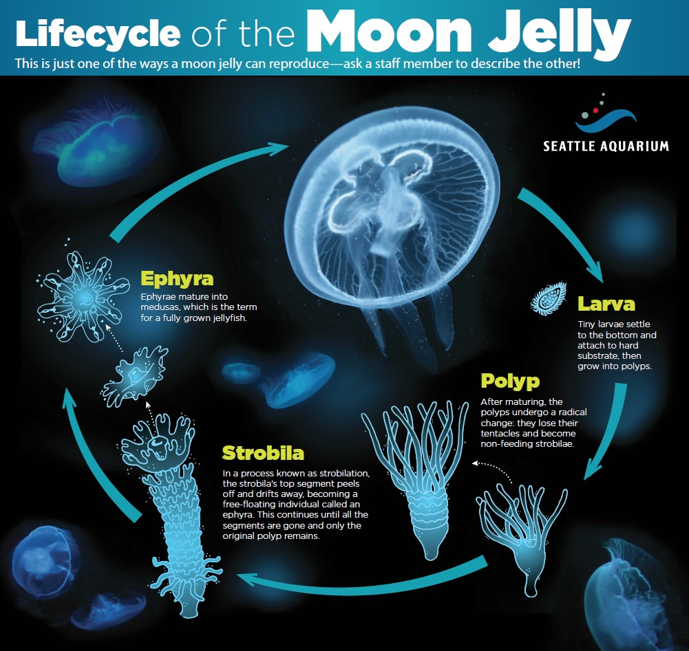 hight resolution of the facts of jellyfish life