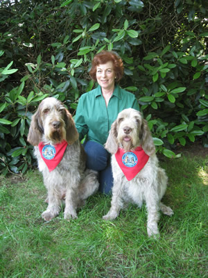 Lauren Friedman, of Milford, Conn., takes a break with her two Spinone Italiano therapy dogs, Drago, left, and Siena.  Drago was recently named winner of a coveted American Kennel Club Humane Fund Award for Canine Excellence (ACE) in the Therapy Dog category, for his work in Newtown's Reed Intermediate School after last December's shootings.