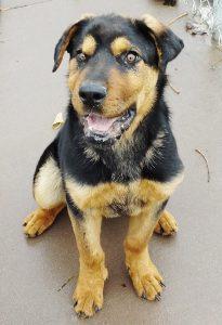 Rudy(8)