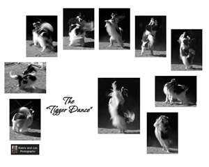 Tigger Dance Collage_Small