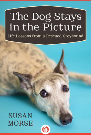 dog stays in the picture cover