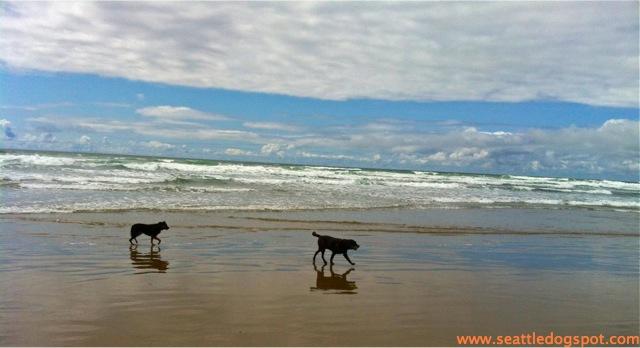Dog Friendly Cannon Beach.
