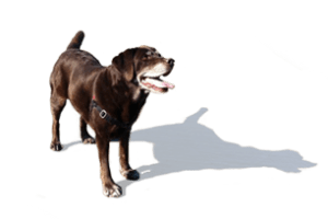 About Seattle DogSpot Page Marker