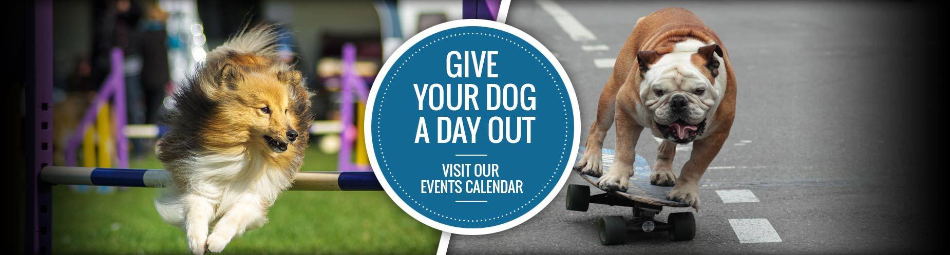Visit our Calendar