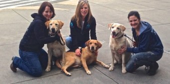 Former Galapagos Island Police Dogs Arrive in Seattle