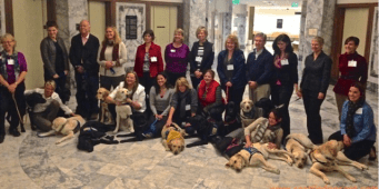 Courthouse Dogs Help Abuse Victims Get Justice