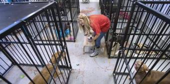 Pierce County Officials Concerned Rescue is Adopting Out Dangerous Dogs