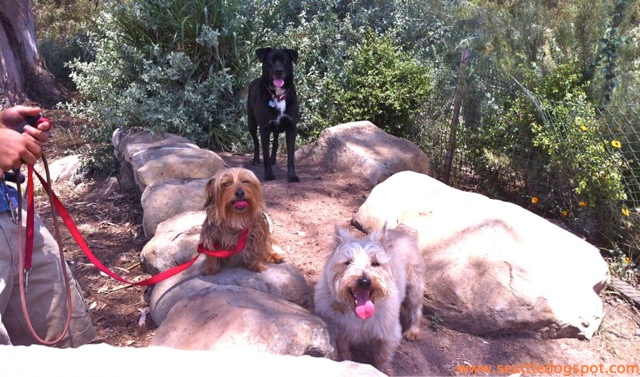 Some of the dogs we met at the off-leash area at the Douglas Family Preserve. Photo from Seattle DogSpot.