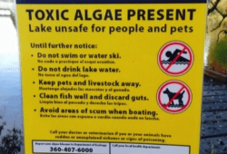 Seattle City Councilmembers Announce Accelerated Plan to Clean Up Green Lake's Toxic Algae