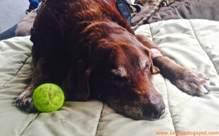 We knew Dylan wouldn't be with us long after he lost interest in tennis balls.