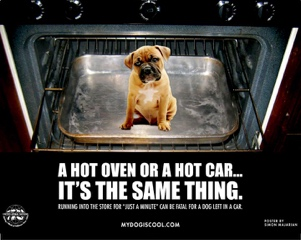 Dogs in Hot Cars.