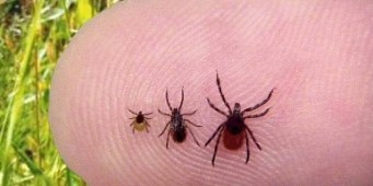 New survey asks Washington dog owners about their run-ins with ticks