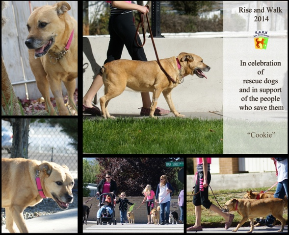 Images from Safe Haven Rescue Kennel.