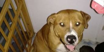 Tacoma woman claims PURRR Rescue stole her dogs
