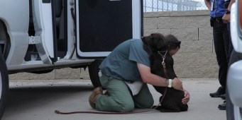 Documentary series chronicles inmates training unwanted dogs for adoption