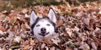 Seattle Area Weekend Dog Events: Friday, November 2 – Sunday November 4