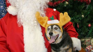 Here's Where You Can Get Pet Photos with Santa in the Seattle Area