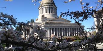 Bill to create animal cruelty registry in Washington introduced in Olympia