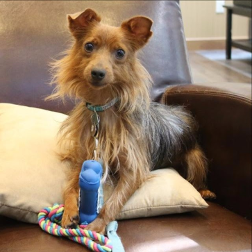 "Hannah's assessment of Pip said he was ""very loving."" However, Hannah founder Scott Campbell ordered euthanization. Image from Hannah the Pet Society."