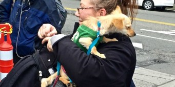"""2nd """"Free Pet Store"""" will provide food/supplies to homeless dog owners on July 9"""