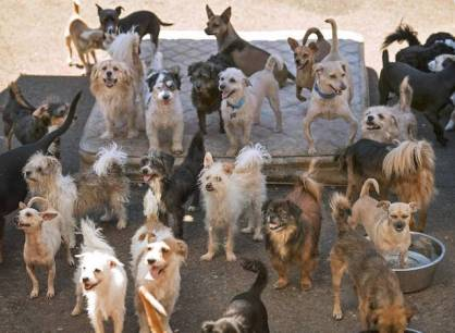 When The Olympian wrote article about Forever Homes in last summer she had 85 dogs on her residential property. Photo from The Olympian.