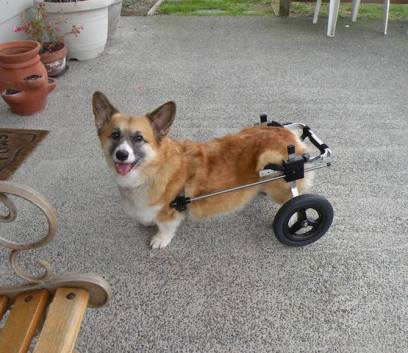 K9 Carts ships 50-70 doggy wheelchairs worldwide every month.