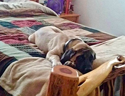 Spokane Mastiff Rescue and Pet Portraits