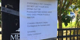 Initial Testing Indicates Leptospirosis Did Not Kill Two Tacoma Dogs