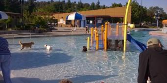 These Seattle Area Pools are Open to Dogs in September