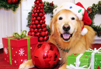 Holiday Dog Tips to keep your pup on their best behavior!