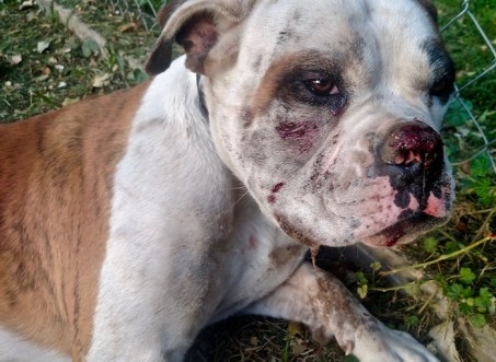 Fake Dog Rescue Beats and Kills Its Dogs